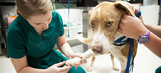 veterinary_medicine